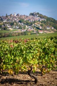 Château de Sancerre - Les vignes