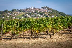 Chäteau de Sancerre - Une dégustation inédite au coeur des terroirs - Le vignoble