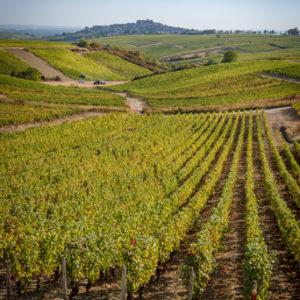 Château de Sancerre - Les vignes d'une des cuvées