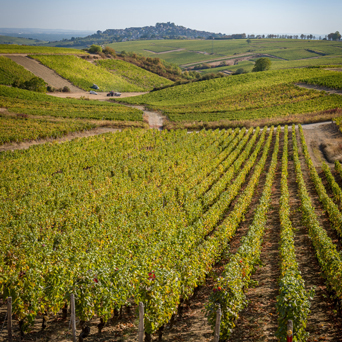 Chateau de Sancerre - The vines of one of the vintages